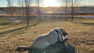 Dog in a nice afternoon