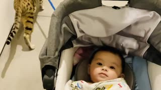 Kitty Pulls Stroller Along With Ease