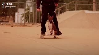 Bear learning to skate in California