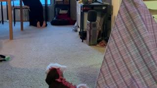 Stretching Surprised Doggo