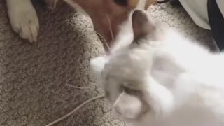 My dog was trying to steal cat food from kitty's face