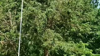 Yelling Timber!