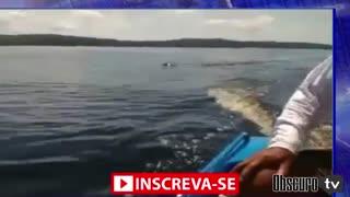 Anaconda giant snake in the amazon