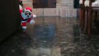 el perrito benito les dice feliz navidad