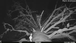 Trail Camera Catches Mountain Lion