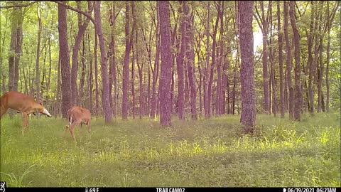 Bucks feeding middle June