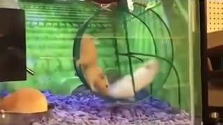 Funny animal video's
