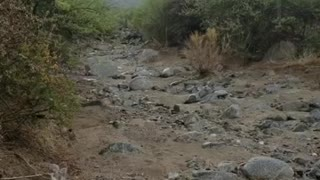 Flash Flooding in Arizona