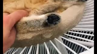 Cute animals just a relaxing video