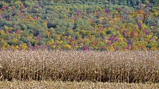 Relaxing New England Autumn