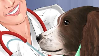 How to Treat a Dog through Stroke