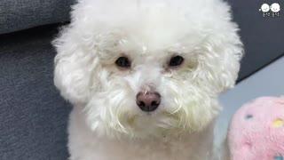 el perro se enoja por que quiere bañarse primero