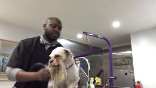 Grooming a scared DOG