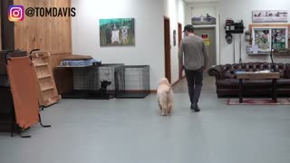 Teach Any Dog To Walk Nicely