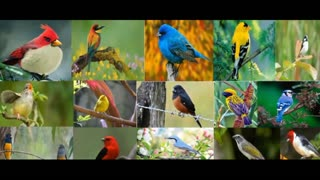 listen to various bird songs with sound quality