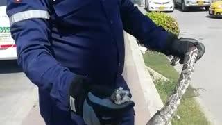 Rescate de Boa en Cartagena