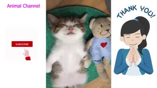 Cute Pets Funny Animals Compilation #04