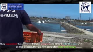 Old man tosses MOTHER DOG into sea in front of her puppies ! Heartbreaking moment !