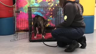 Video About Training Dogs To be Nice