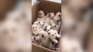 Cute Kittens in a box