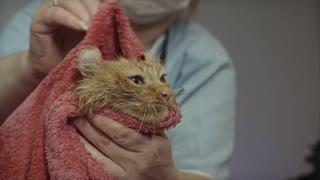 baby cat taking a bath