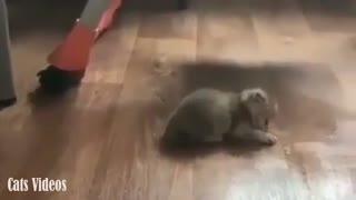 A Little kitten walking Slowly.