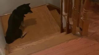 Relocating Baby Raccoons