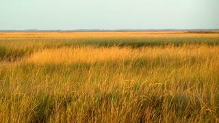 American Grasslands