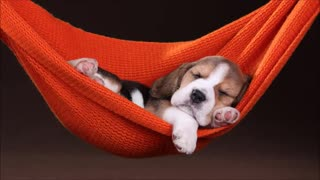 Music to sleep your pets. It works!!!