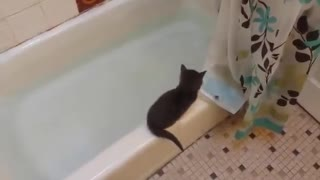 Kitty dive.