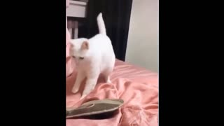 Cat dancing with the beats