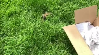 Drowning Chipmunk Rescued and Released