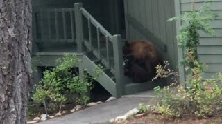 Mama Bear Breaking and Entering