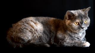 Unique and wonderful cat