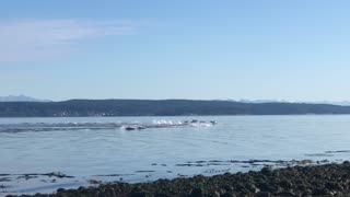 Beautiful Dolphin Pod Sighting in the Bay