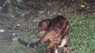 Cat loving outdoors feeling