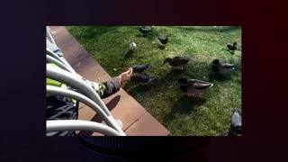 Funny conflict between birds