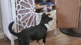 Kitty in a box and puppy play