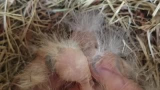 Front Door Bird Nest