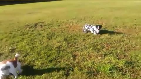 Colloections of Dog In 1 Video Soo Nice
