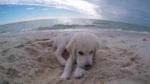 Cute Puppy doesn't like camera in his face