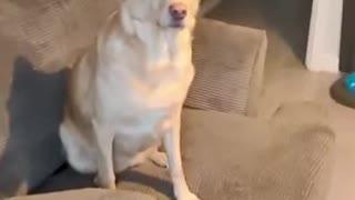 Dog discovered Snow | Instant Regret