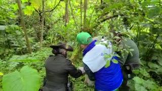 Liberan más de 200 animales silvestres, recuperados en Bucaramanga y el área