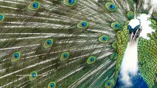 Most Beautiful Birds on Planet Earth!