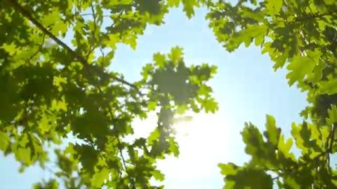 Relaxing Music | Nature Status | Morning Time Status | Meditation Music | Deep Sleep Music