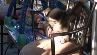 Monkey See Monkey Babys