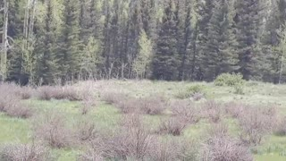 finding the perfect camping spot Rio grande national Forest Colorado