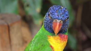 Birds world | free birds