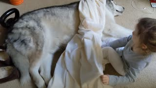 Precious little girl covers sleeping dog with a blanket