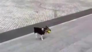 Smart dog ,cutest video ever!!!